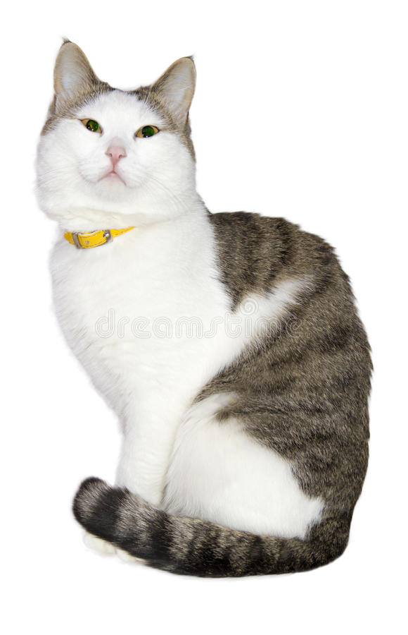 Lichte mooie kat stock foto's