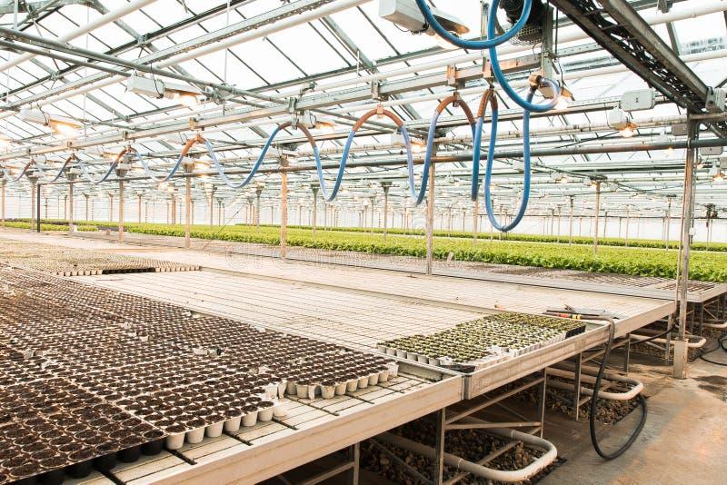 lichte serre en de productie van vruchten en groenten stock afbeelding