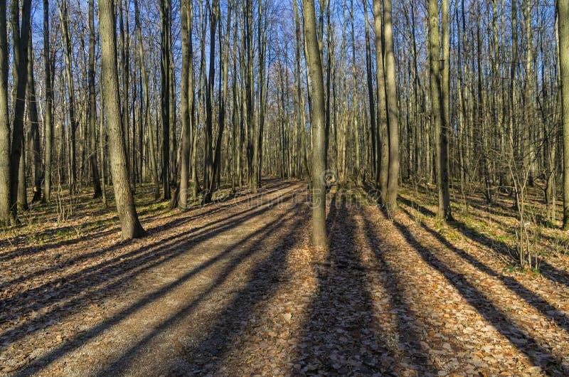Download Lichter Und Schatten Im Herbstwald Stockfoto - Bild von baum, kabel: 47100426