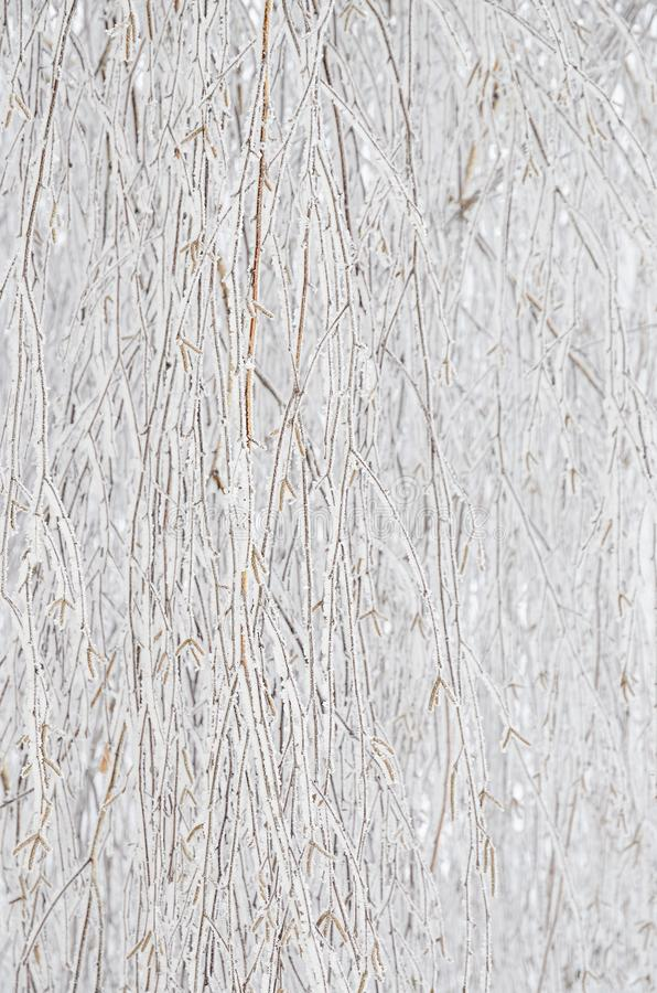 Lichtgrijze abstracte achtergrond van ijs bij takken royalty-vrije stock afbeelding