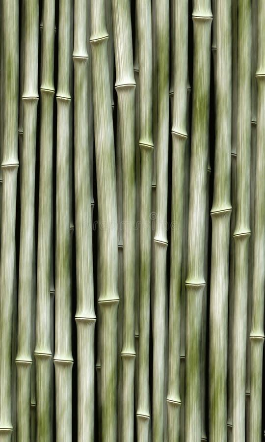 Lichtgroen bamboe royalty-vrije stock foto's