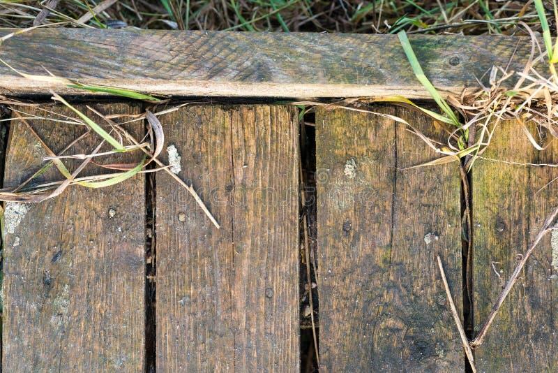 Lichtgroene houten plankenwijnoogst of grunge textuur stock foto's