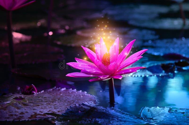 Lichtpaarse drijvende lichte de fonkelings purpere achtergrond van Lotus Pink stock afbeeldingen
