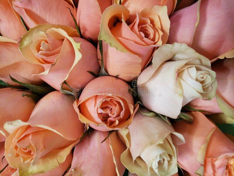 lichtrose nam bloem in een bloemenboeket voor gift van liefde, achtergrond en textuur toe stock fotografie