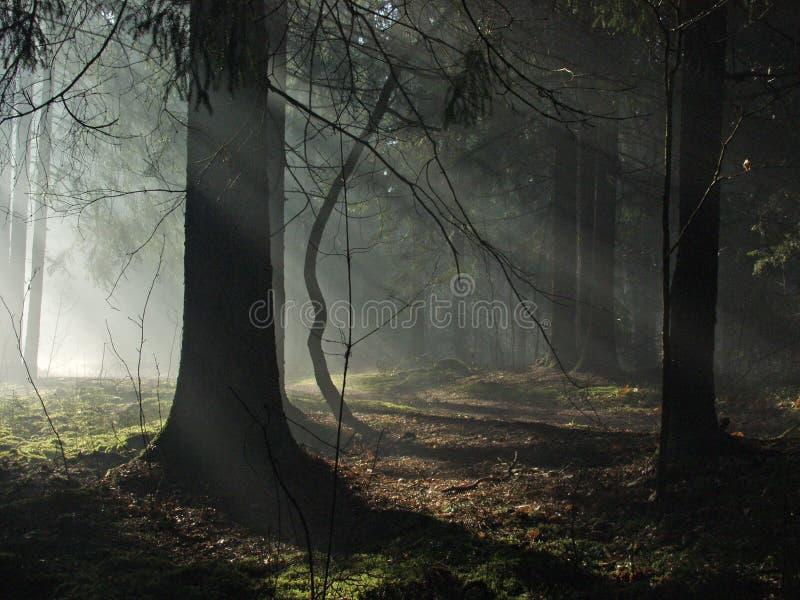Lichtstralen die dark ingaan royalty-vrije stock foto