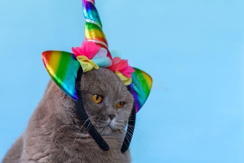 Licorne britannique mignonne de chat de Shorthair de portrait sur le fond bleu photos libres de droits