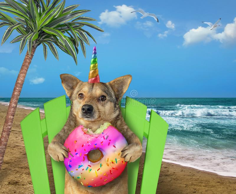 Licorne de chien se reposant sur la plage photos stock
