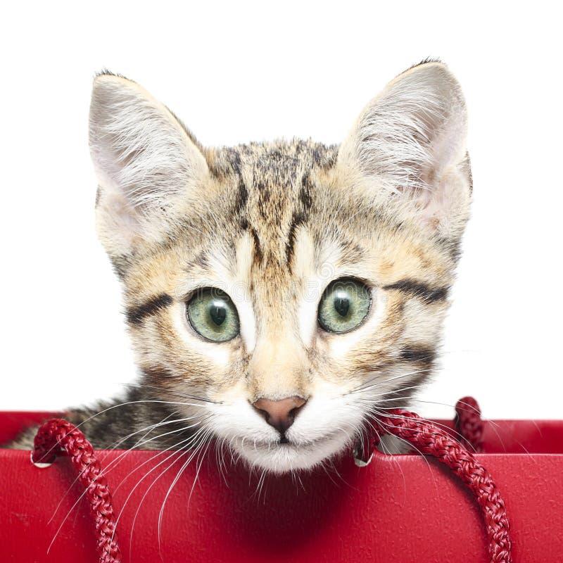 Download Śliczna Figlarka W Czerwonym Torba Na Zakupy Zdjęcie Stock - Obraz złożonej z śliczny, oliwi: 28966472