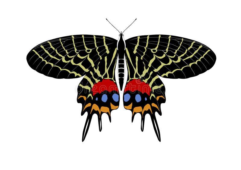 Lidderdalii bonito de Bhutanitis da borboleta ilustração stock