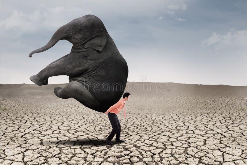 Lider biznesu niesie słonia na suchej ziemi obraz royalty free