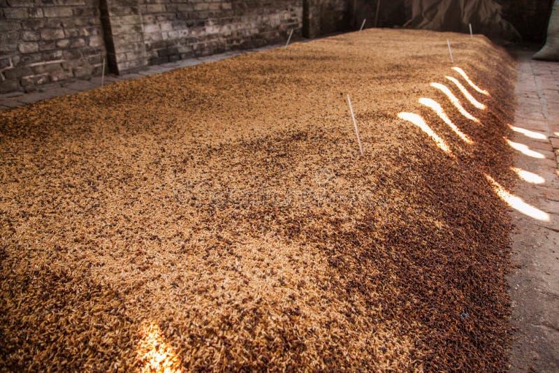 Lie de fermentation de brasserie de ville de Leshan Qianwei Rochester étant photographie stock libre de droits