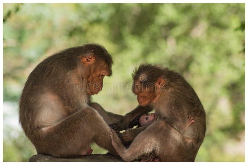 Liebe der wild lebenden Tiere lizenzfreie stockfotos