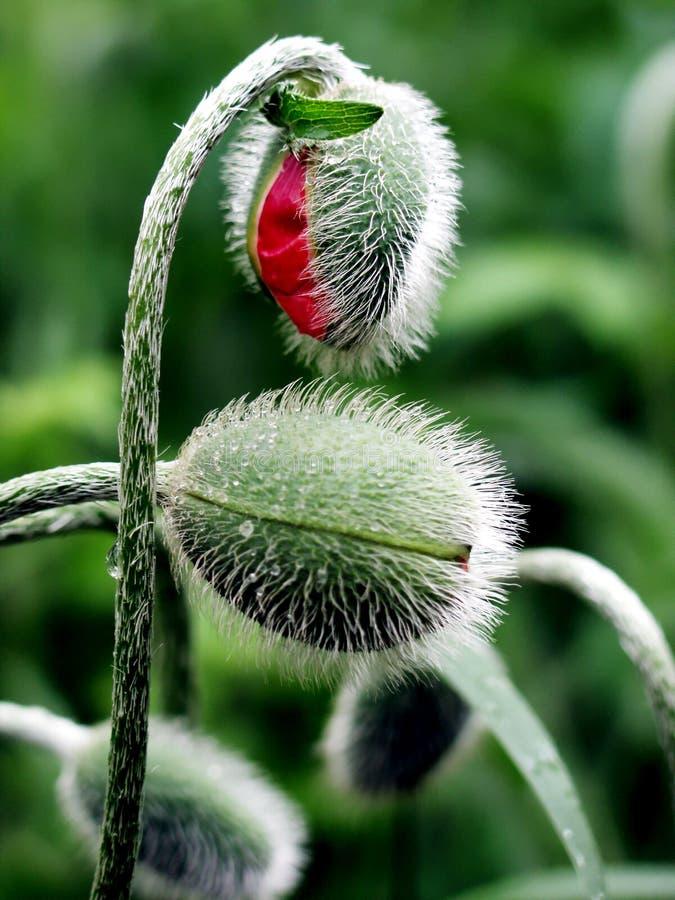 Download Lieben Sie mich zart stockbild. Bild von flora, liebe, garten - 28831