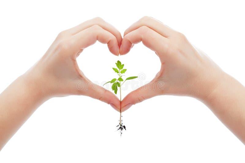 Lieben Sie und schützen Sie Natur und das Leben stockfotos