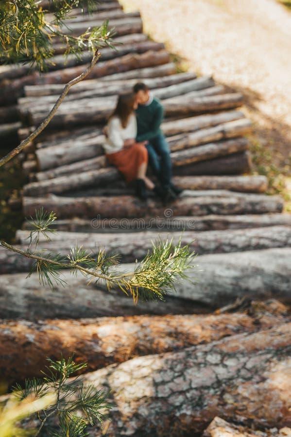 Liebesgeschichte auf dem Holzstapel im Herbstwaldzweig der Tanne im selektiven Fokus stockbild