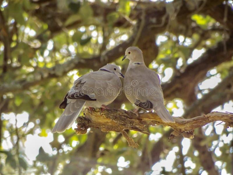 Liebesv?gel und ein Baum stockfotografie
