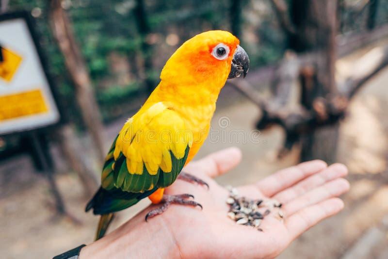 Liebesvogel lizenzfreies stockfoto
