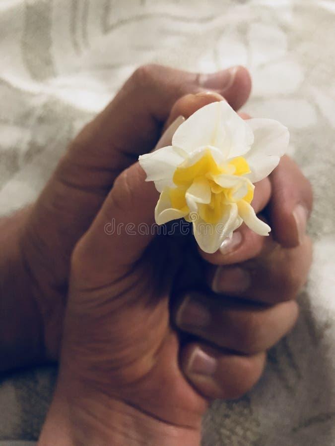 Liebesweichheits- und -frühlingsblumen stockfotos