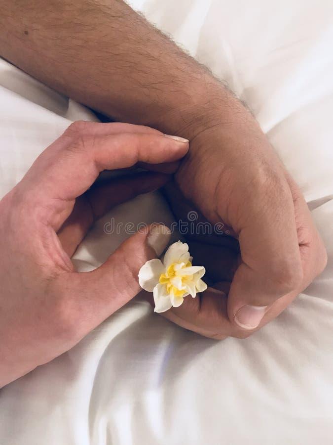 Liebesweichheits- und -frühlingsblumen stockbilder