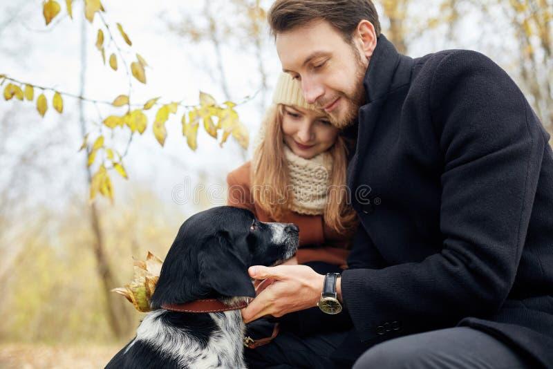 Liebevolle Paare gehen durch den Herbst Forest Park mit einem Spaniel stockfotos