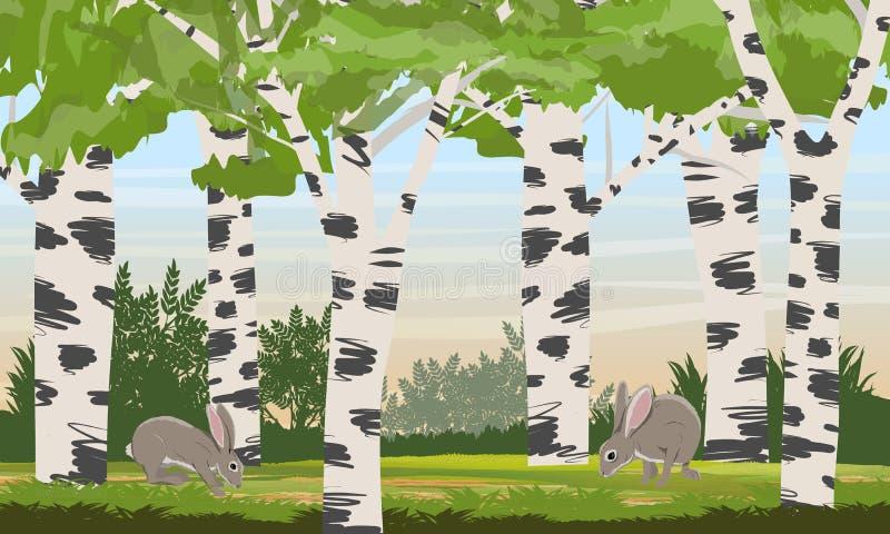 Liebres en una arboleda del abedul Animales salvajes del bosque ilustración del vector