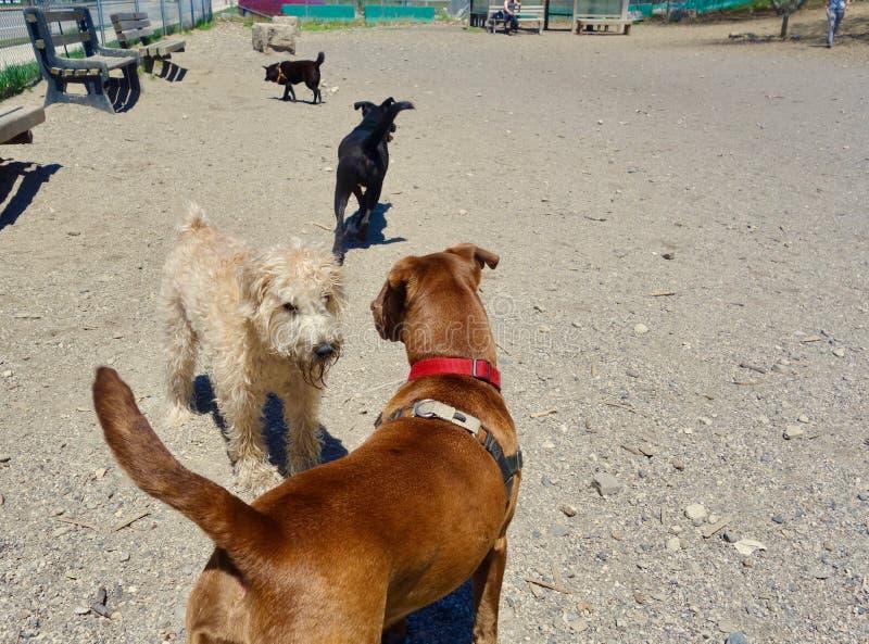 Liefde bij het Hondpark royalty-vrije stock afbeelding