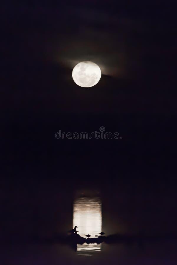 Liefde in Maanlicht stock foto