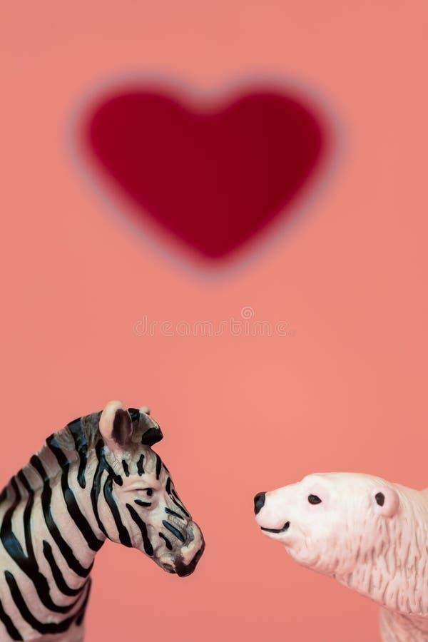 Liefde tussen de verschillende en tegenstanders: een beer, vleesetend uit een koude habitat en een zebra, herbivoren uit een hete stock afbeelding