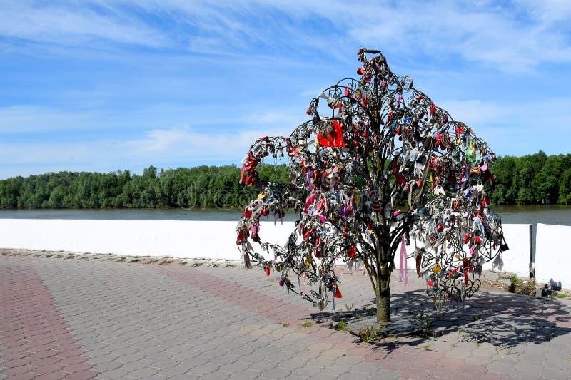 Liefdeboom op de Bank van Irtysh, Omsk, Rusland royalty-vrije stock fotografie