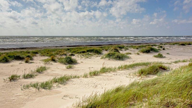 Liepajaduinen langs de Oostzee stock afbeeldingen