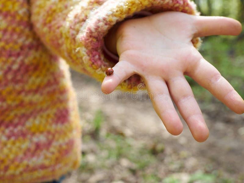 Lieveheersbeestje in de hand van een kind stock afbeeldingen