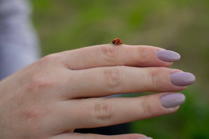 Lieveheersbeestje die op de hand van het meisje kruipen stock afbeeldingen