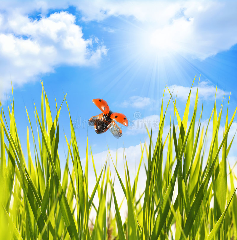 Lieveheersbeestje onder blauwe hemel royalty-vrije stock foto's