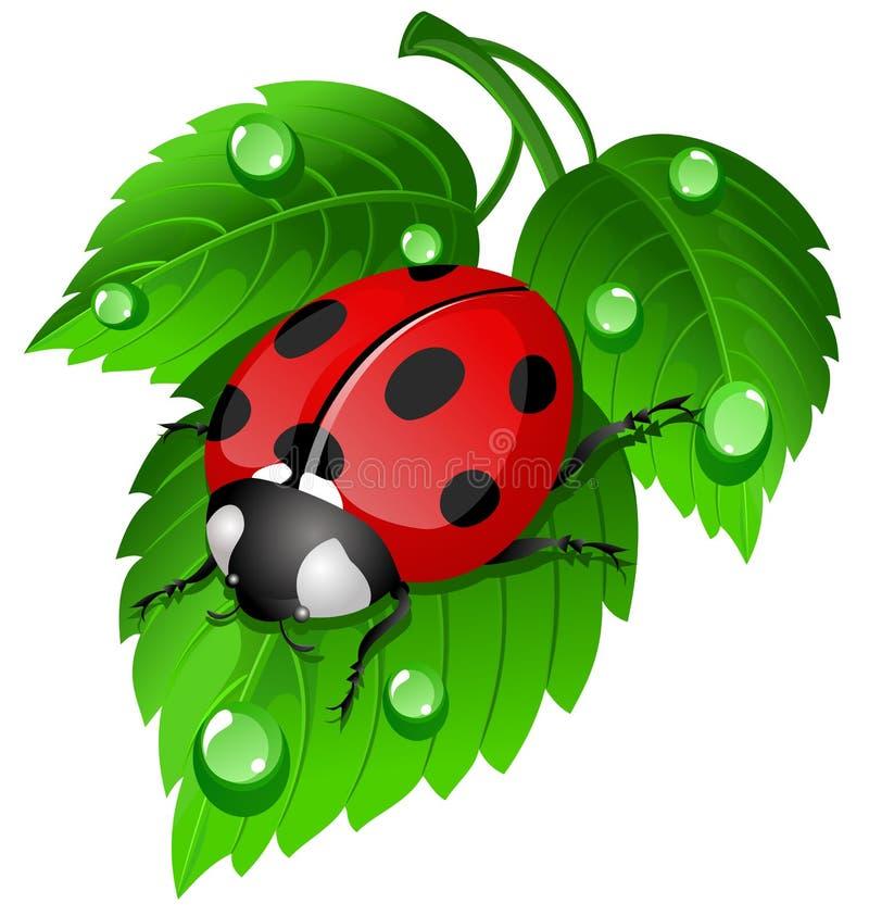 Lieveheersbeestje op blad vector illustratie