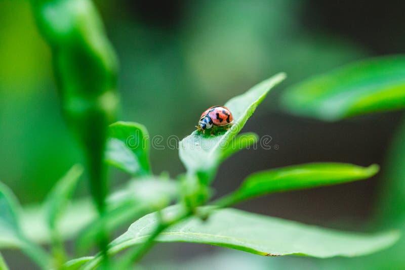 Lieveheersbeestje op boom stock afbeeldingen