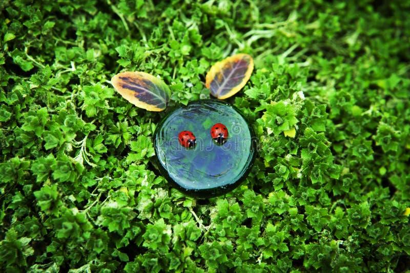 Lieveheersbeestje van het tuin het groene glas stock fotografie
