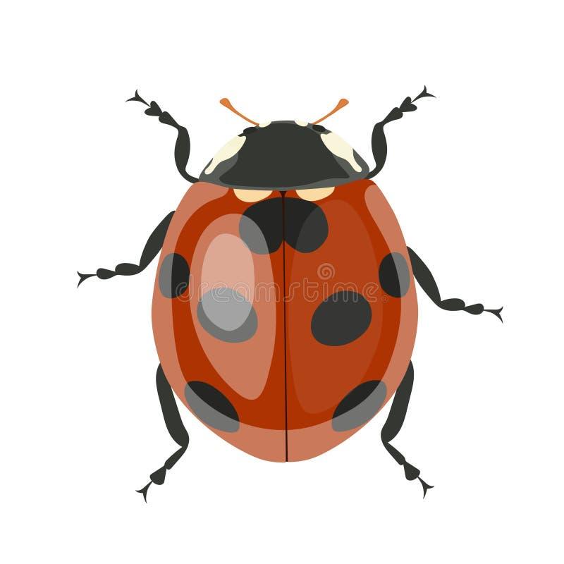 Lieveheersbeestje Vector clipart op witte achtergrond wordt ge?soleerd die stock illustratie
