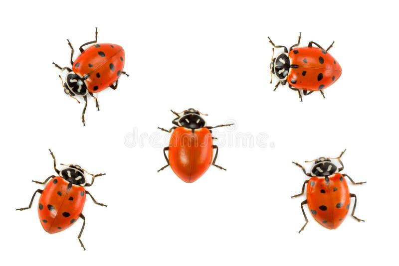 Lieveheersbeestjes - durf Verschillend te zijn royalty-vrije stock afbeelding
