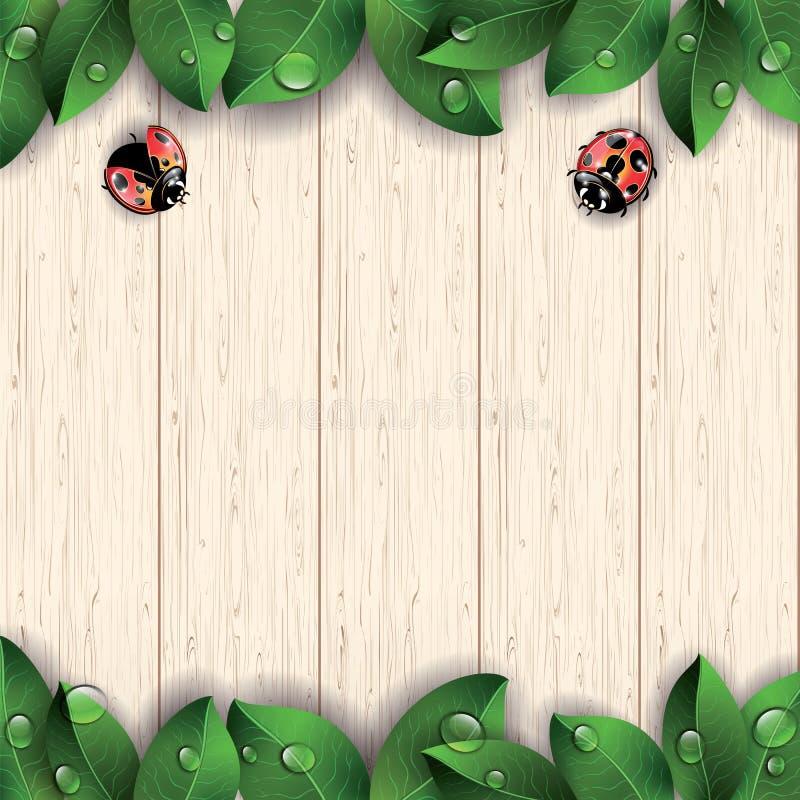 Lieveheersbeestjes en groene bladeren op houten achtergrond vector illustratie