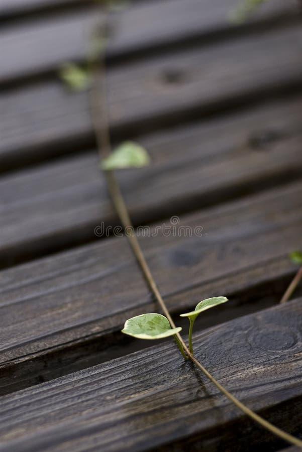Free Life Stock Photography - 12634792