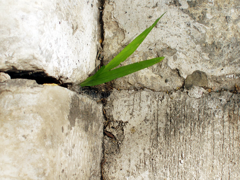 Life. Grass growing amid cement slabs stock photography