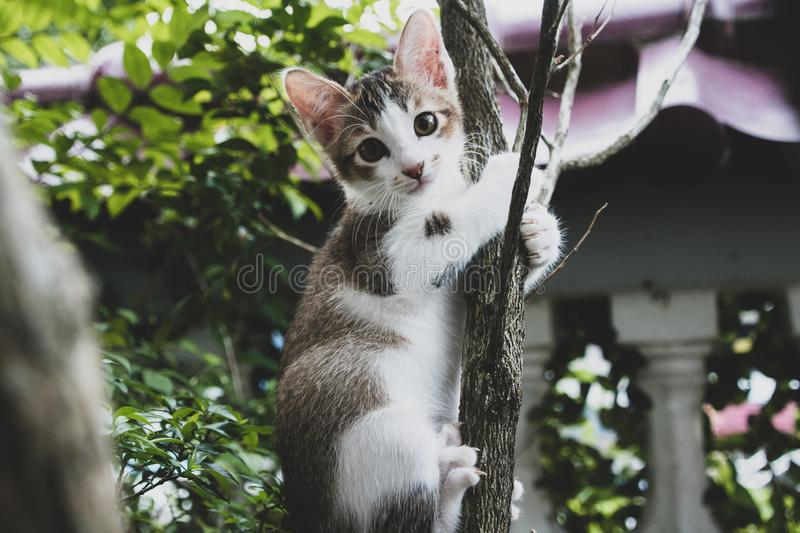 Kitty climbing on the tree royalty free stock photography
