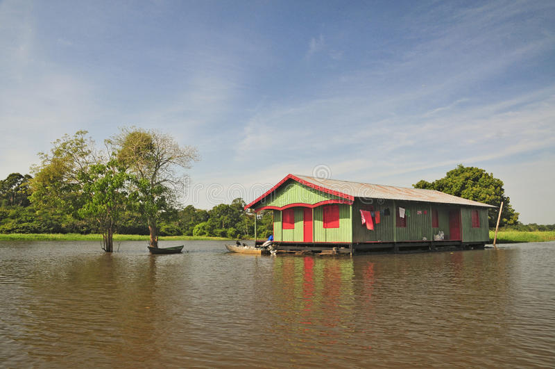 Life in Amazon Jungle (The Amazonia) royalty free stock photo