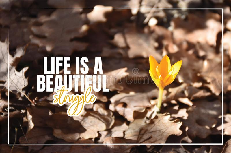 Life is a beautiful Struggle, beautiful life quotes, wording design, banner, yellow flower in early spring stock photography