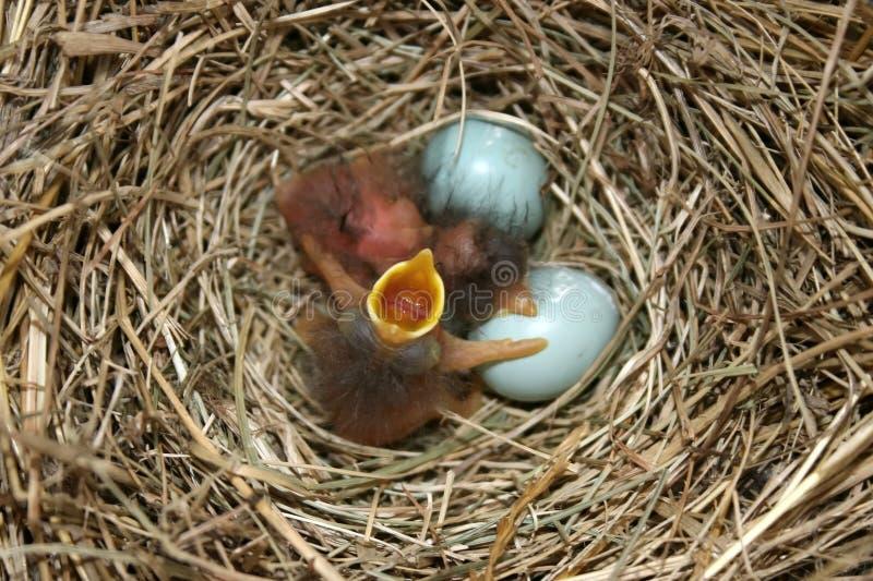 Download Life begins stock photo. Image of nature, avian, nesting - 2751570