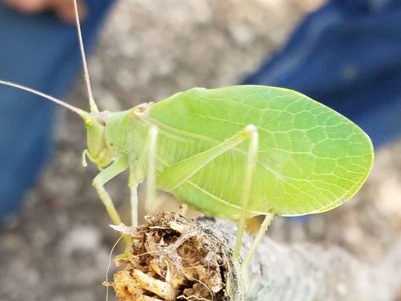 The life of a bug stock photos