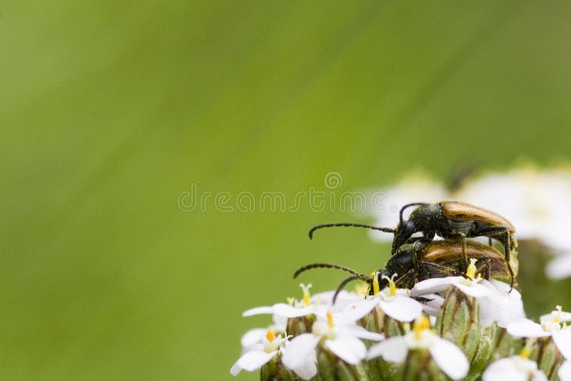 Life of bugs royalty free stock image