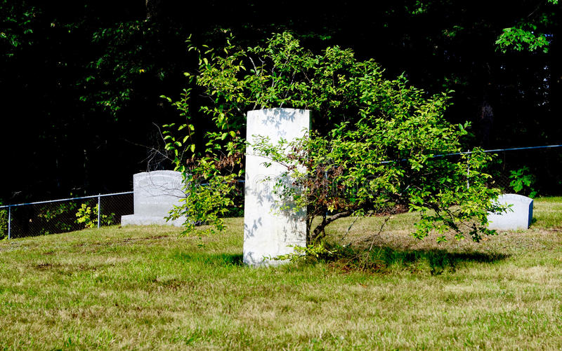 Life Continues after Death. A green leafy bush growing around an ancient gravestone in a Maine cemetery in early fall stock photos