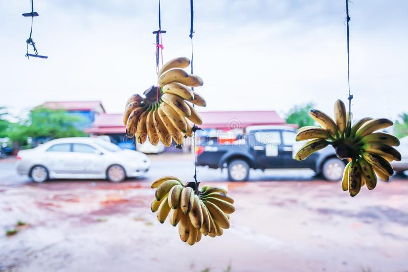 Daily life of country road in Koh Kong, Cambodia, ripe bananas hanging in front of the grocery store royalty free stock photography