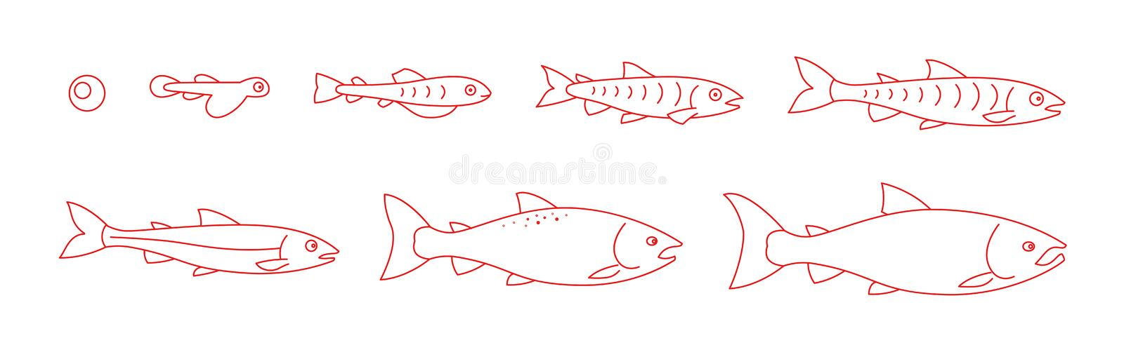 Life cycle of the Atlantic Salmon. Stages of salmon fish growth set. Coho fish from egg to fry. Sockeye aquaculture. Animation progression. Outline contour red royalty free illustration